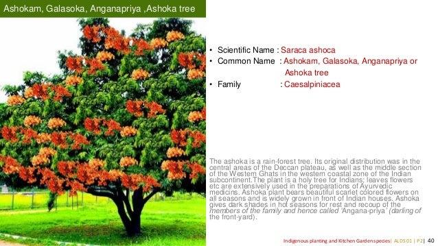 Indigenous Plant Species Of Kerala