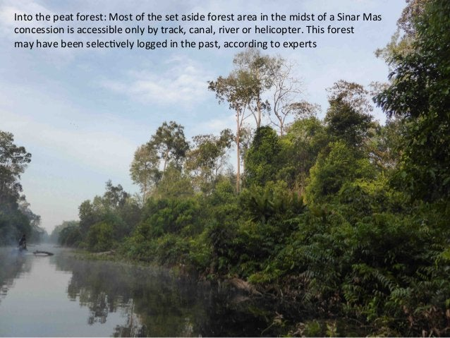 This  forest  o]en  floods  more  than  three  meters   above  this  level.  Crocs  lurk  somewhe...