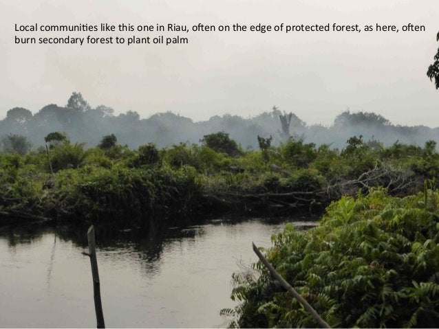 Just  as  the  scale  of  deforesta)on  is  shocking,  forest   held  back  from  destruc)on  is...