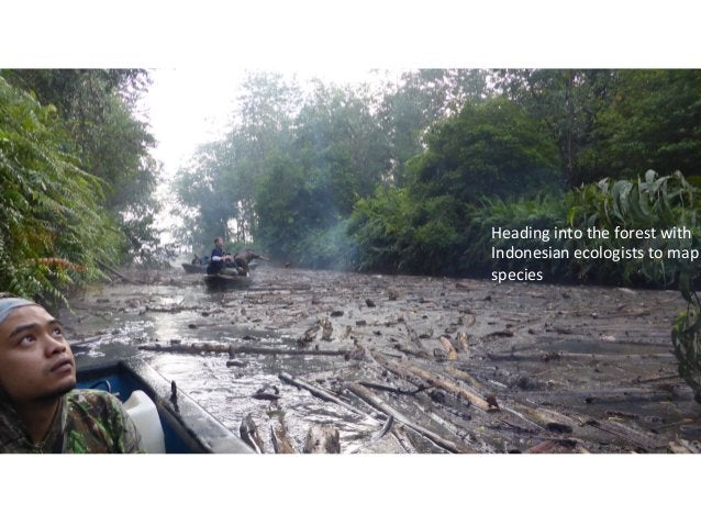 Heading  into  the  forest  with   Indonesian  ecologists  to  map   species