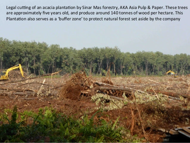 forest preservation essay Conservation of forest- essay for student and slogan important of forest  conservation: forest is the most important for the protection and the.