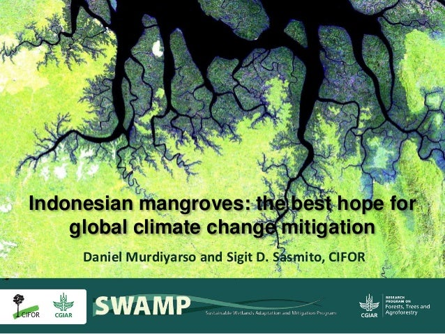 Daniel Murdiyarso and Sigit D. Sasmito, CIFOR Indonesian mangroves: the best hope for global climate change mitigation
