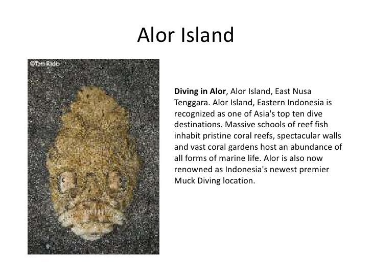 Alor Island      Diving in Alor, Alor Island, East Nusa     Tenggara. Alor Island, Eastern Indonesia is     recognized as ...