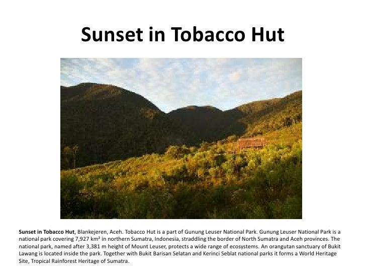 Sunset in Tobacco Hut     Sunset in Tobacco Hut, Blankejeren, Aceh. Tobacco Hut is a part of Gunung Leuser National Park. ...