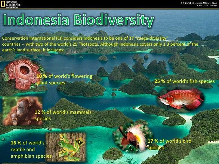 Indonesia presentation English