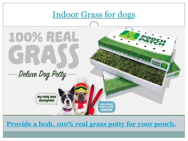 Indoor Grass for dogs Provide a lush, 100% real grass potty for your pooch.