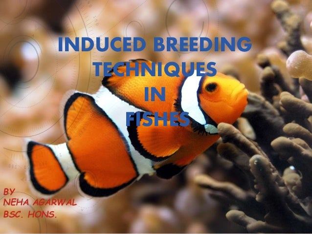 INDUCED BREEDING TECHNIQUES IN FISHES BY NEHA AGARWAL BSC. HONS.