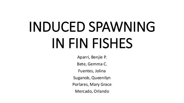 INDUCED SPAWNING IN FIN FISHES Aparri, Benjie P. Bete, Gemma C. Fuentes, Jolina Suganob, Queenilyn Porlares, Mary Grace Me...