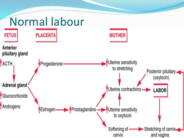 normal spontaneous delivery Normal delivery icd-9-cm 650 is a delivery normal normal labor 650 excludes breech delivery (assisted) (spontaneous) nos delivery by vacuum extractor.