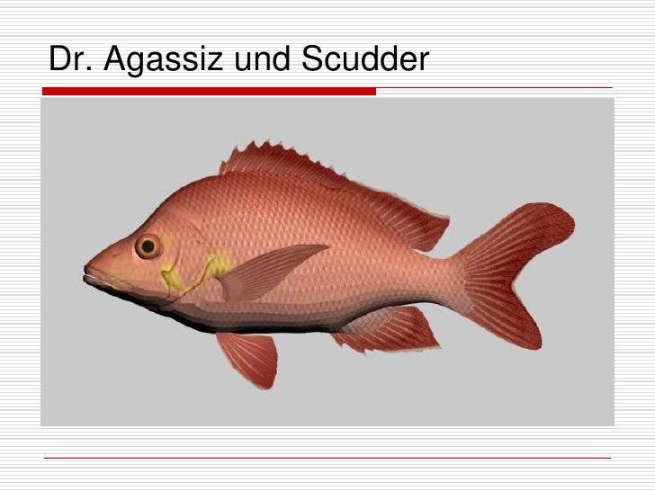 Dr. Agassiz und Scudder