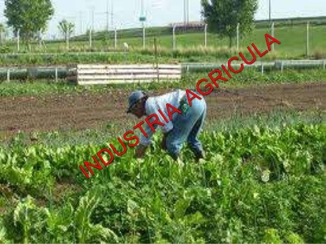    La industria agrícola es uno de los principales    segmentos de la economía brasileña, con importancia    tanto en el ...