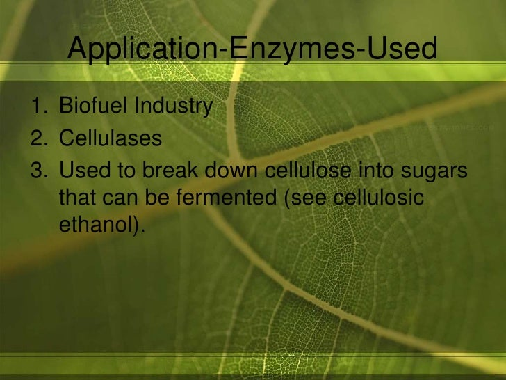 application of enzymes essay Enzyme essay: good collection of academic writing tips and free essay samples you can read it online here.