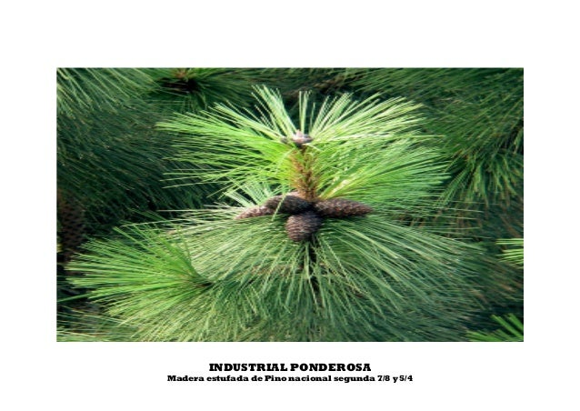 INDUSTRIAL PONDEROSA Madera estufada de Pino nacional segunda 7/8 y 5/4
