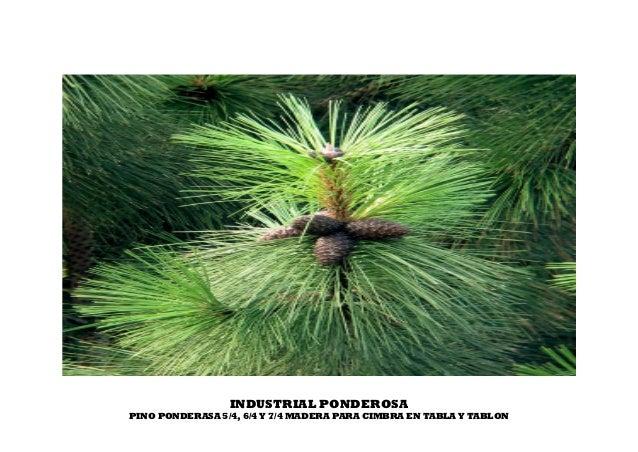 INDUSTRIAL PONDEROSA PINO PONDERASA 5/4, 6/4 Y 7/4 MADERA PARA CIMBRA EN TABLA Y TABLON