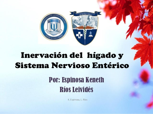 Inervación del hígado y Sistema Nervioso Entérico Por: Espinosa Keneth Ríos Leividés K. Espinosa, L. Ríos