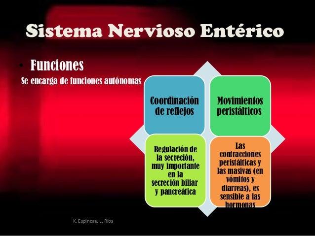 Sistema Nervioso Entérico • Funciones Se encarga de funciones autónomas Coordinación de reflejos Movimientos peristáltico...