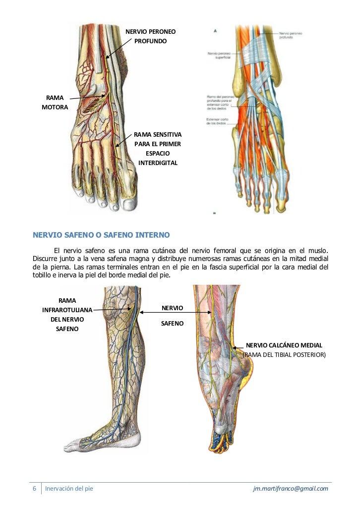 Inervacion del pie