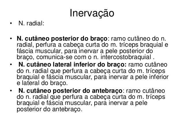 Inervação • N. radial: • N. cutâneo posterior do braço: ramo cutâneo do n. radial, perfura a cabeça curta do m. tríceps br...