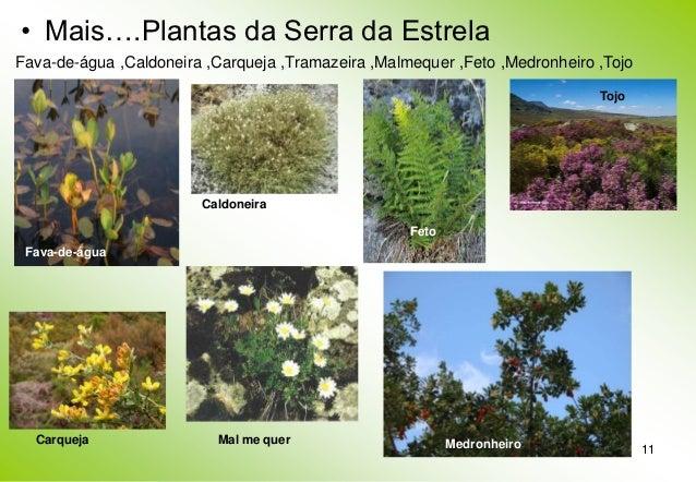 Parque natural da serra da estrela for Plantas ornamentales para parques