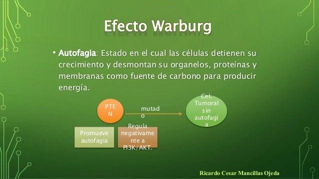 EFECTO DE WARBURG EBOOK