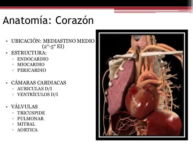 Infarto Agudo al Miocardio/ Fisiología Cardiovascular