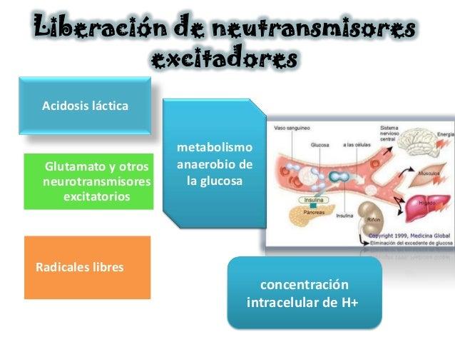 Liberación de neutransmisores         excitadores Acidosis láctica                     metabolismo Glutamato y otros   ana...