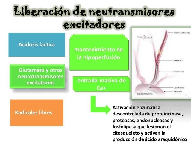 Liberación de neutransmisores         excitadores Acidosis láctica                     mantenimiento de                   ...