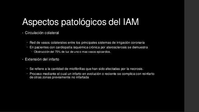 Aspectos patológicos del IAM• Circulación colateral Red de vasos colaterales entre los principales sistemas de irrigación...
