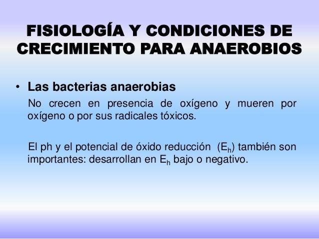 Infecciones causadas por bacterias anaerobias Slide 3