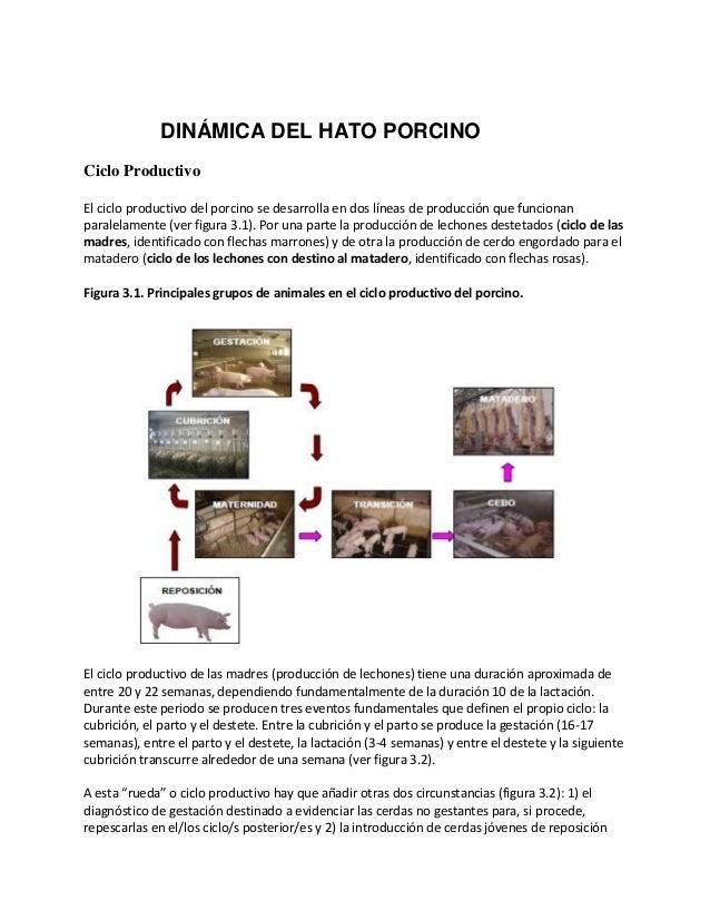 Ciclo Productivo El ciclo productivo del porcino se desarrolla en dos líneas de producción que funcionan paralelamente (ve...