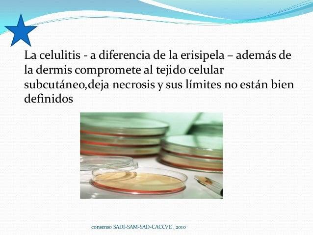 La celulitis - a diferencia de la erisipela – además de la dermis compromete al tejido celular subcutáneo,deja necrosis y ...