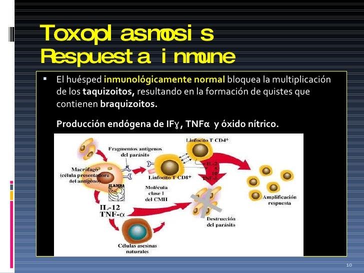 Toxoplasmosis Respuesta inmune <ul><li>El huésped  inmunológicamente normal  bloquea la multiplicación de los  taquizoitos...