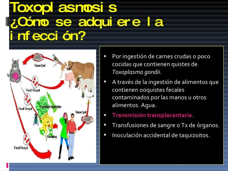 Toxoplasmosis  ¿ C ó mo se adquiere la infección? <ul><li>Por ingestión de carnes crudas o poco cocidas que contienen quis...