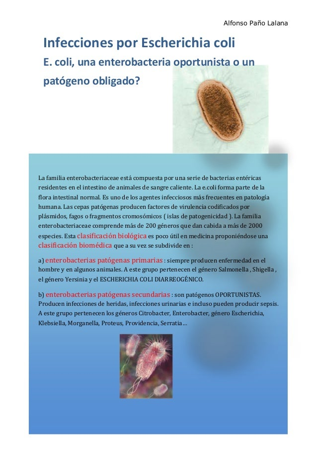 Alfonso Paño Lalana La familia enterobacteriaceae está compuesta por una serie de bacterias entéricas residentes en el int...