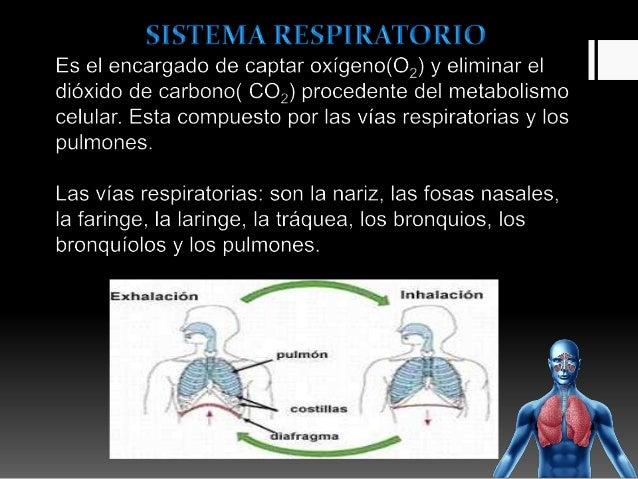 Infecciones respiratorias altas y bajas Slide 2