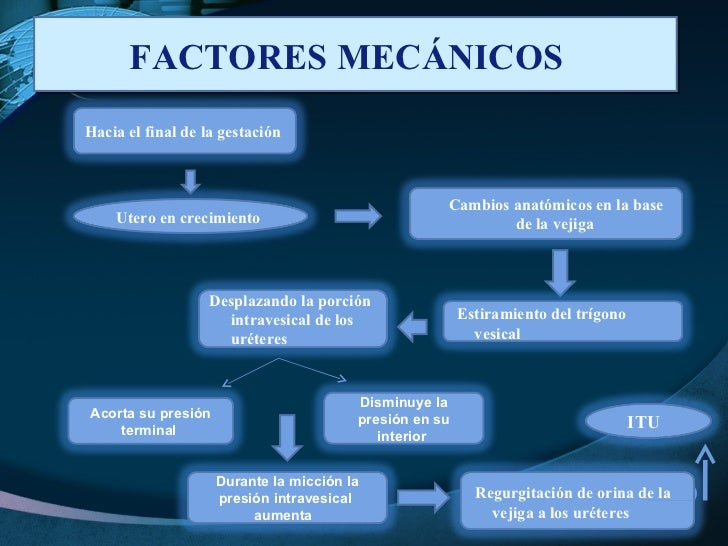 FACTORES MECÁNICOS  Utero en crecimiento  Hacia el final de la gestación  Estiramiento del trígono vesical  Cambios anatóm...