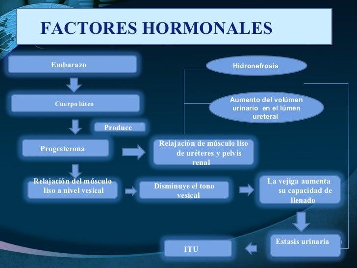 FACTORES HORMONALES  Hidronefrosis  Aumento del volúmen urinario  en el lúmen ureteral  Embarazo  Progesterona  Cuerpo lút...