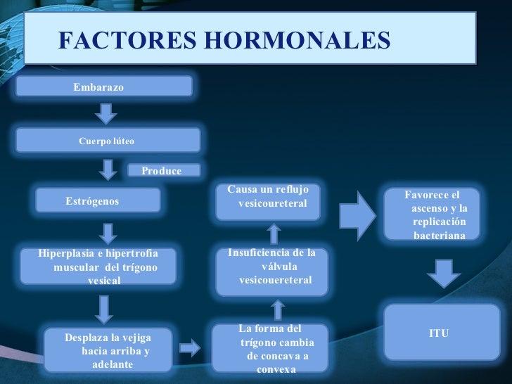 FACTORES HORMONALES  Embarazo  Estrógenos  Cuerpo lúteo  Desplaza la vejiga hacia arriba y adelante  Insuficiencia de la v...