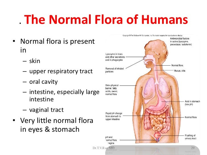... 29. . The Normal Flora ...