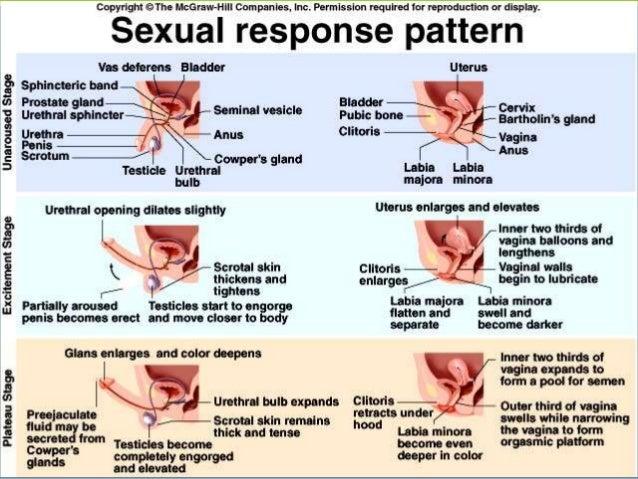Causes of swollen clitoris