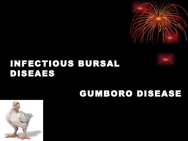 INFECTIOUS BURSAL DISEAES     GUMBORO DISEASE