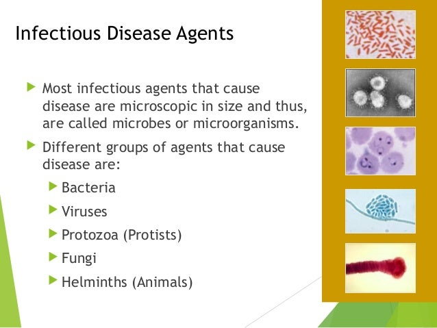 Infectious Disease Examples Choice Image Example Cover Letter For
