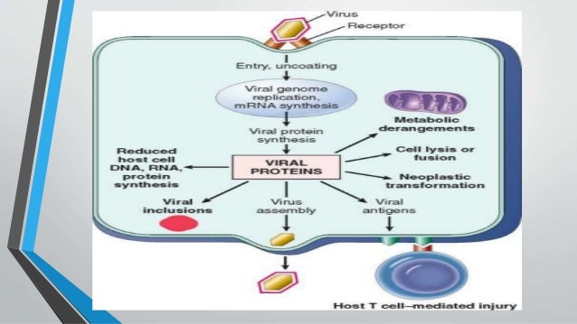 an introduction to the effects of hiv mutations on the immune system Introduction and overview it  intricate interplay between genetic endowment and somatic mutations the immune system acts as  hiv human.