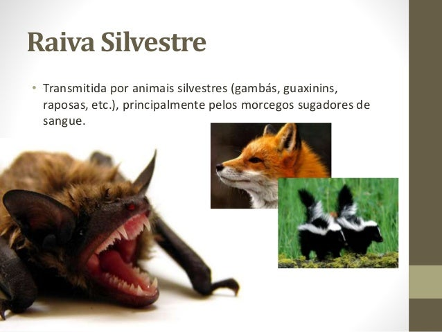Resultado de imagem para raiva em animais silvestres