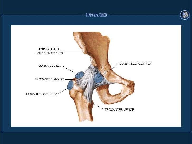 Perfecto Bursa Anatomía De La Cadera Imágenes - Anatomía de Las ...