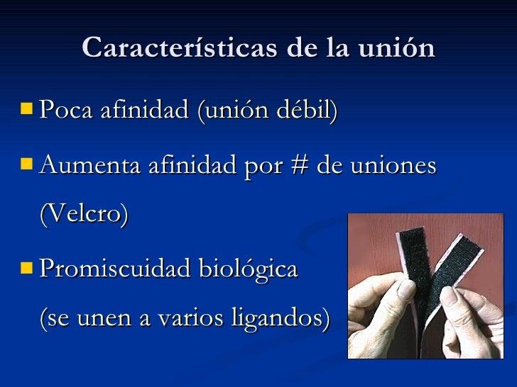 Características de la unión <ul><li>Poca afinidad  (unión débil) </li></ul><ul><li>Aumenta afinidad por # de uniones  (Vel...