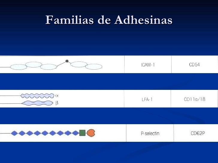 Familias de Adhesinas