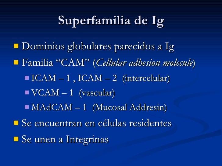 "Superfamilia de Ig <ul><li>Dominios globulares parecidos a Ig </li></ul><ul><li>Familia ""CAM""  ( Cellular adhesion molecul..."