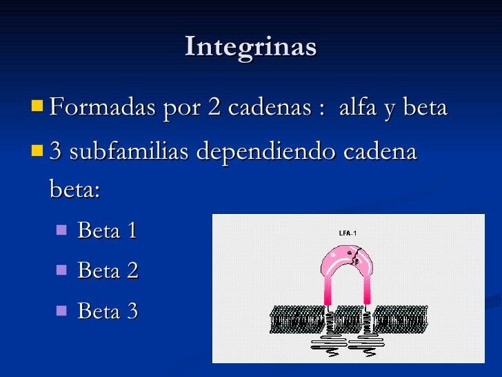Integrinas <ul><li>Formadas por 2 cadenas :  alfa y beta </li></ul><ul><li>3 subfamilias dependiendo cadena beta: </li></u...
