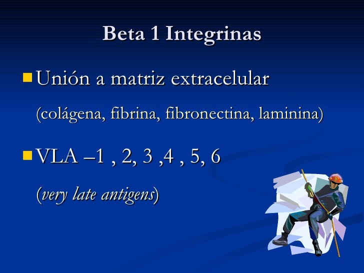 Beta 1 Integrinas <ul><li>Unión a matriz extracelular  (colágena, fibrina, fibronectina, laminina) </li></ul><ul><li>VLA –...